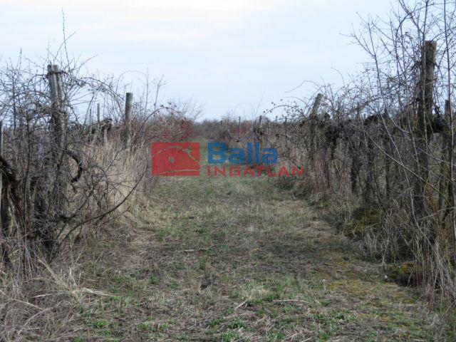 Balatonvilágos - Szőlő:  0 m²-es mezőgazdasági ingatlan   (5'300'000 ,- Ft)
