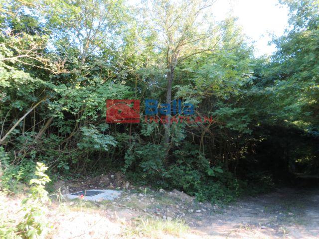 Szentantalfa - Külterület:  0 m²-es mezőgazdasági ingatlan   (25'000'000 ,- Ft)