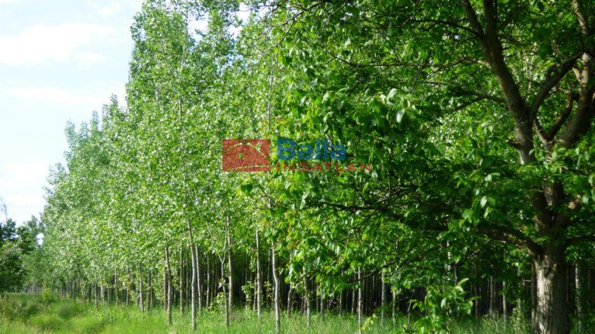 Balatonszabadi - Belterület utca:  0 m²-es mezőgazdasági ingatlan   (199'000'000 ,- Ft)