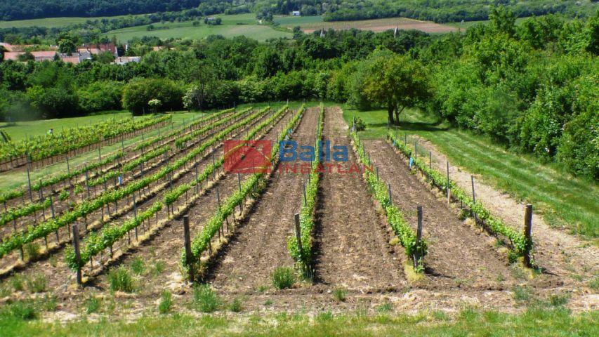 Szentantalfa - Tői dűlő:  0 m²-es mezőgazdasági ingatlan   (24'000'000 ,- Ft)